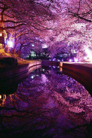 「埼玉県吹上市の元荒川。穏やかな河川のおかげで、水の中にも桜が咲いているかのよう。」 「夜桜水鏡」 埼玉県吹上市の元荒川。穏やかな河川のおかげで、水の中にも桜が咲いているかのよう。 pic.twitter.com/avCyh4Pp97