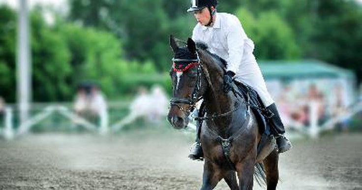 Cómo construir una pista para caballos. Ya sea que estés buscando una pista de práctica recreacional para tu caballo o preparándote para una exhibición, construir una pista es útil para ti y para tu caballo. La mayoría de los obstáculos son relativamente fáciles de obtener e instalar, y la pista les ofrecerá diversión desafiante.
