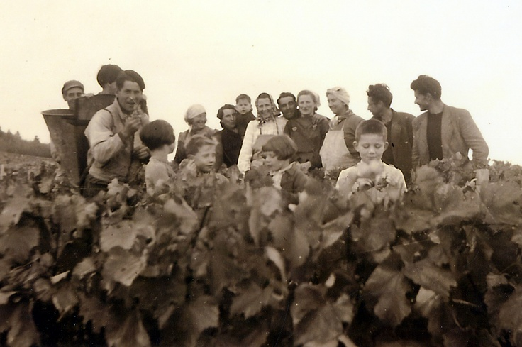 Famille de ma grand-mère Marie-Louise Pinon, vignes de Saint Bris #Yonne #bourgogne #France