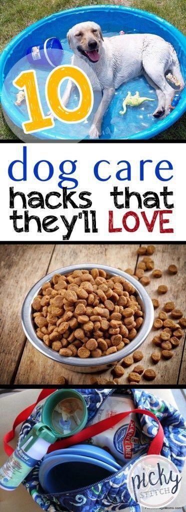 10 Dog Care Hacks That They'll LOVE|Dog Care, Dog Care Hacks, Pet Care, Pet Care Hacks, Easy Pet Care, Pet Care TIps and Tricks #DogCare #PetCare #LifeHacks #Hacks #doghacks