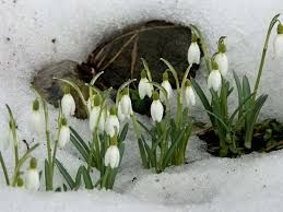 Картинки по запросу весна картинки