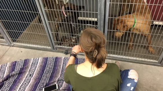 How To Volunteer At An Animal Shelter Shelter Dogs Animal Shelter Shelter