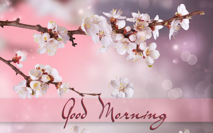 Good Morning Messages Quotes Images Pics Sms Pictures HD ...