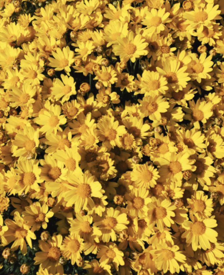 Flower Aesthetic, Yellow Wallpaper, Yellow
