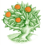 Tinderbox - Natural Room Sprays - Original Scent 500ml (vegan) - FriendsOfTheLagomorph
