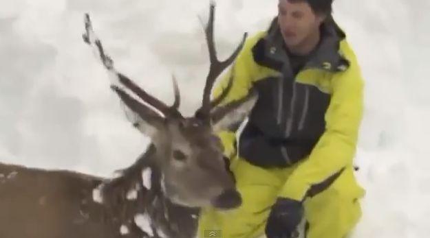 Freeskieri zachránili zviera pred smrťou