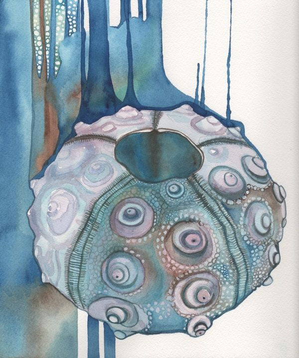 Collection from the Sea by Tamara Phillips, via Behance