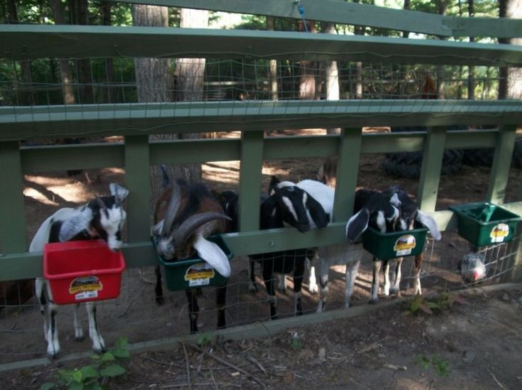 #goatvet likes this Fenceline Goat Feeder. Goats with horns make it difficult to use keyhole feeders