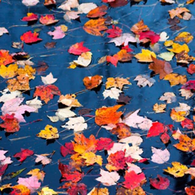 41 best autumn color images on Pinterest