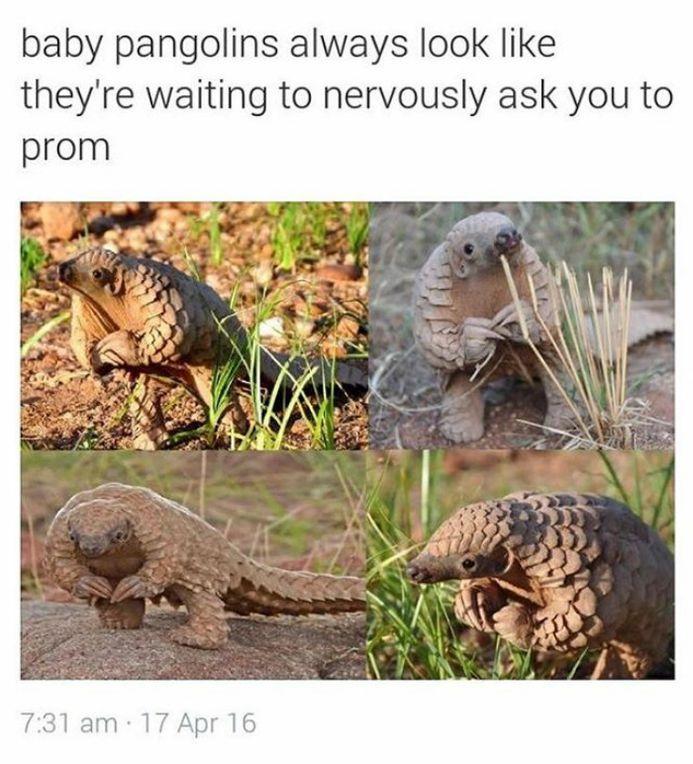 100 Animal Memes To Make You Laugh This Spring Funnyfoto Funny Animals Cute Funny Animals Cute Animals