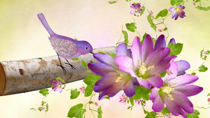 hd purple birds flowers wallpaper ussharing pinterest