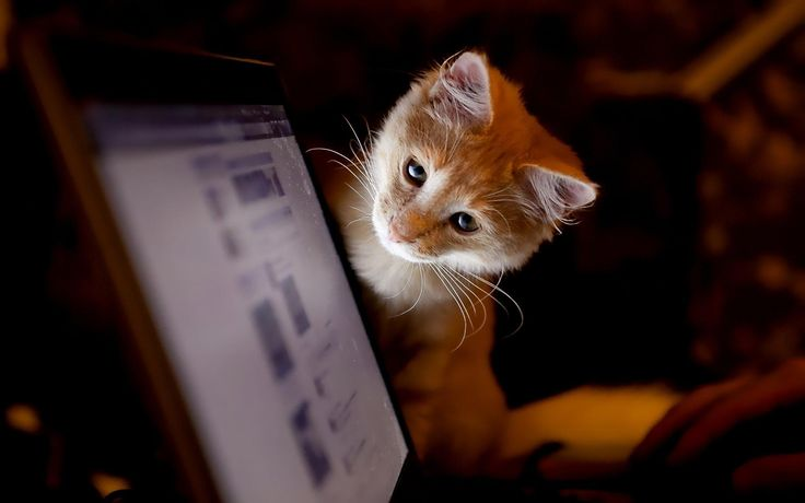 Обзор сервиса для быстрого поиска клиентов в социальных сетях и на досках объявлений. Идеальная альтернатива биржам копирайтинга.