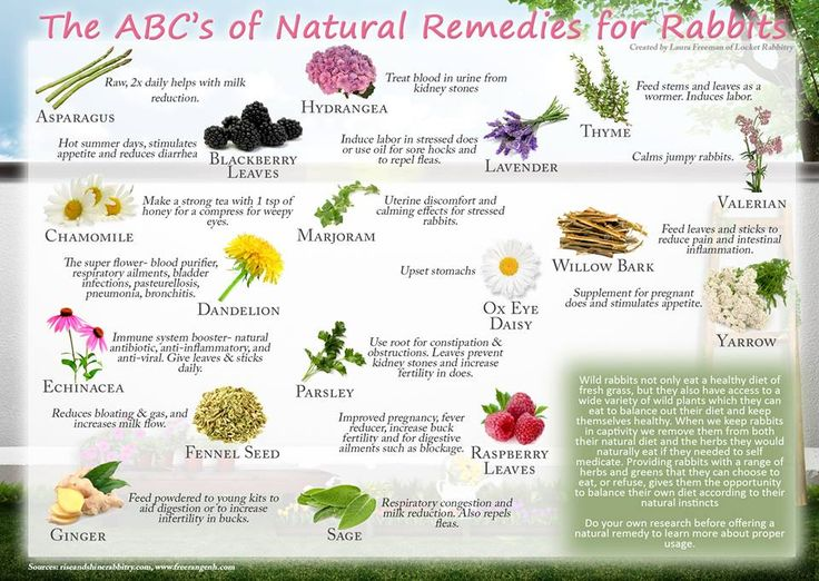 NATURAL REMEDIES FOR RABBITS
