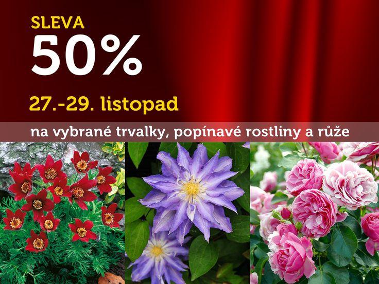 SLEVY začínají! Tento víkend u STARKLA v Čáslavi můžete zakoupit vybrané trvalky, popínavé rostliny a růže se SLEVOU 50%! Dnes začínáme! A otvíráme v 8:30! Nabídka platí pouze 27.-29.11.2015!