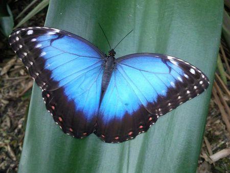 Geen vlinders in de buik, maar vlinders in de lucht bij Vlindertuin Vlindorado.