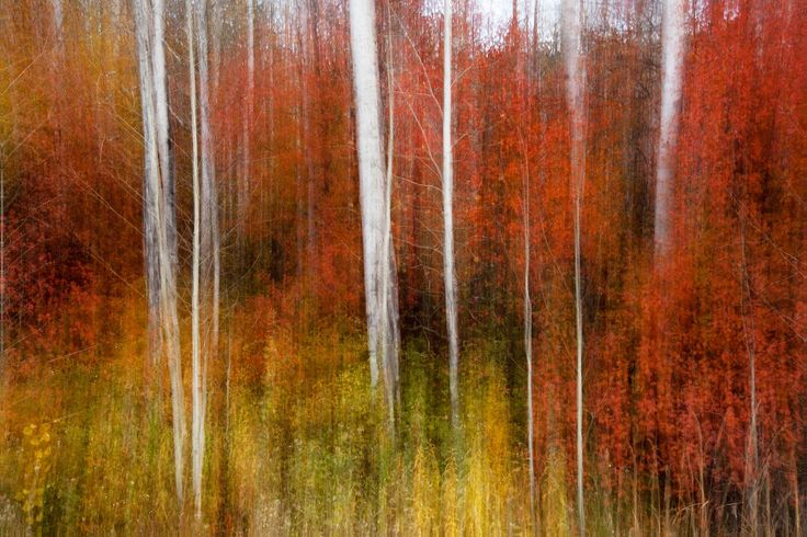 Autumn Colors - Photography Print on Canvas - Canvas Wall Art
