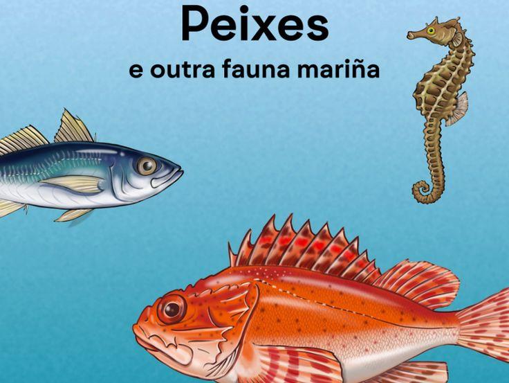"""Os peixes e outra fauna mariña, con 30 ilustracións de Tokio, é para aprender, identificar e provocar interese polo mundo dos peixes, crustáceos, moluscos e outra fauna mariña nas nenas e nenos.  Ten como obxectivos incrementar o uso do galego na educación infantil, proporcionar materiais en galego para nenas/os de 0 a 6 anos, potenciar o uso de vocabulario en galego e aprender o nome de peixes comúns.  Compleméntase cunha canción de Magín Blanco, """"Peixiños do mar"""". ISBN: 978-84-617-6176-0"""