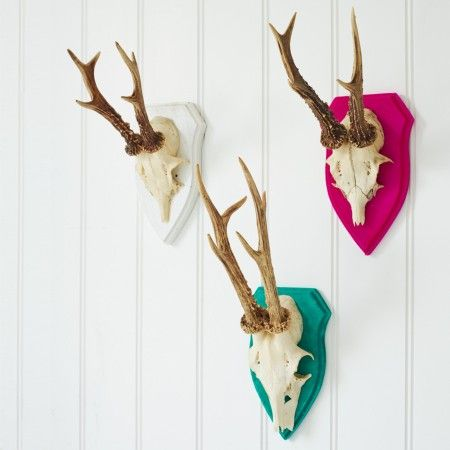 Roebuck Antlers on Shields - Animal Heads - Home Accessories