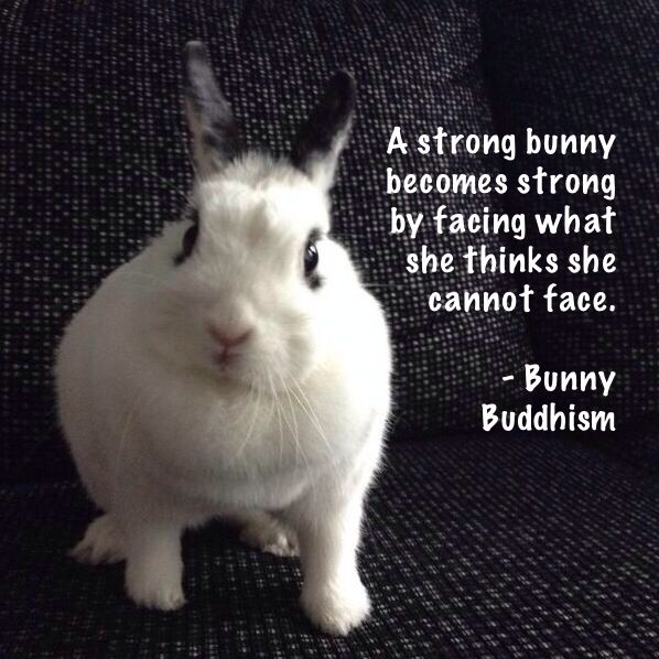 A strong bunny becomes strong by facing what she thinks she cannot face. - Bunny Buddhism