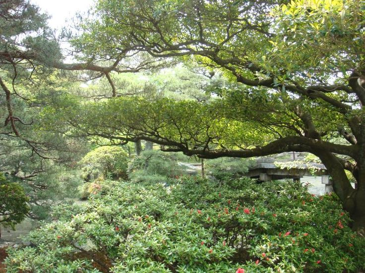Regálate naturaleza: decora tu jardín con árboles - http://www.jardineriaon.com/regalate-naturaleza-decora-tu-jardin-con-arboles.html