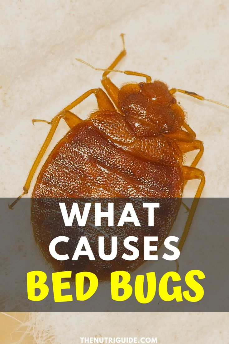 Learn what causes bed bugs and where they come from, where