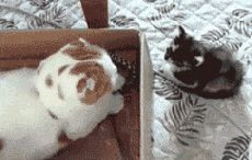 100 funny cat animated gifs 23 | funny gifs,gif