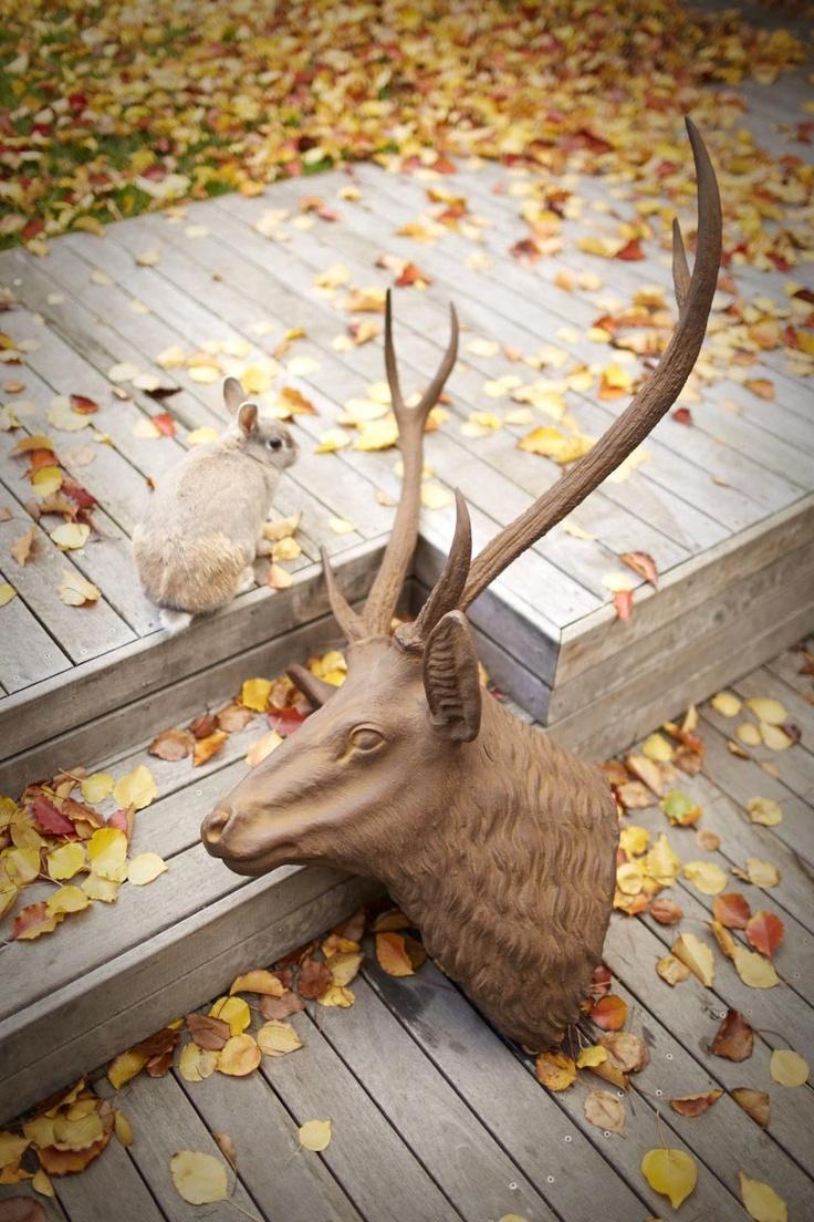 Vintage look deer head wall hanging. #deerhead #vintagelook #homedecor #kidsbedroom #parenthoodstore