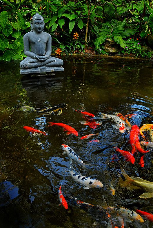 284 best images about koi fish ponds on pinterest for Japanese koi water garden