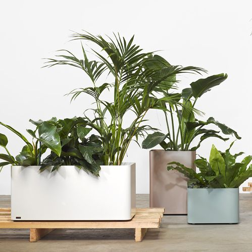 Softline planters // The fully welded construction allows for soil to be placed directly into the planter or they can take pots. Its up to you.