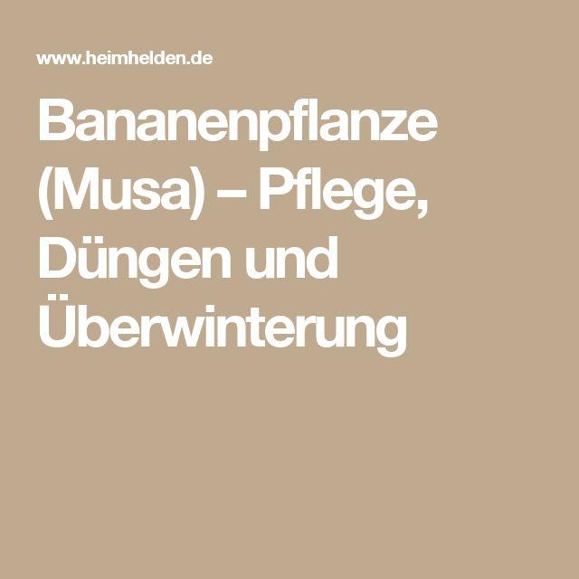 Bananenpflanze (Musa) – Pflege, Düngen und Überwinterung