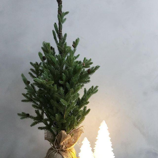 Se på dette nydelige juletreet🎄 Vi har et igjen på lager. Treet er 1m, og koster 899,- Superfin dekorasjon😍 Pynt det med din favoritt pynt til jul🌟 #vakrerom #vakreromnettbutikk #interiør #juletre #jul#stue