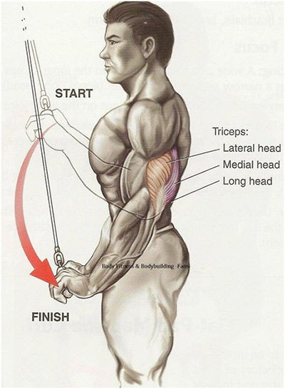 Best Benefits of Triceps Exercises: In addition to toning up your upper arms, triceps exercises offer the following benefits.