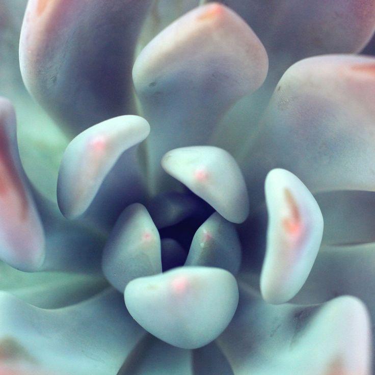 Portofolio Fotografi Makro - Succulent Fine Art Photography  #MACROPHOTOGRAPHY