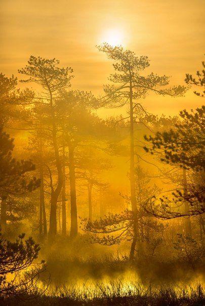 «Осеннее золото рассвета». Ленинградская область. Автор фото — Фёдор Лашков: