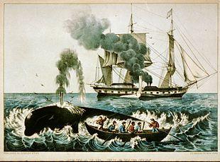 Nascita e sviluppo della pesca delle balene, molto ricercate poiché il loro grasso era infiammabile e veniva utilizzato per alimentare le lanterne