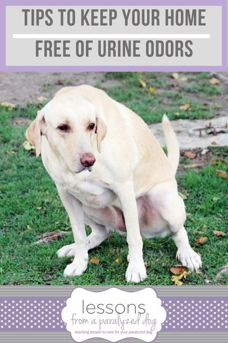 Pet Parents Favorite Tips To Keep Your Home Free Of Urine Odors