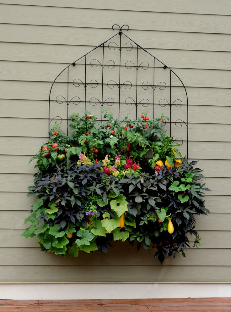 This side planted window box trellis bination features