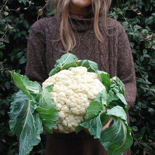 Dads are great, thanks for the most enormous organic cauliflower I've ever seen old man. Some recipe ideas would be greatly appreciated you guys, I've got a lot of cauliflower and no idea what to make!