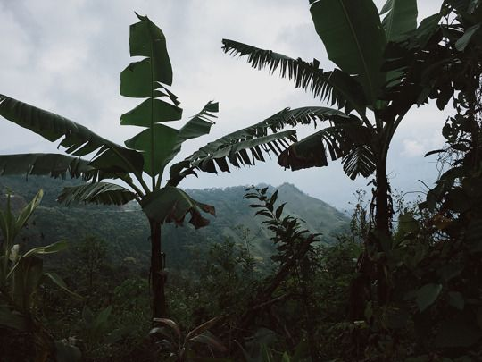 he hilly jungles of mexico