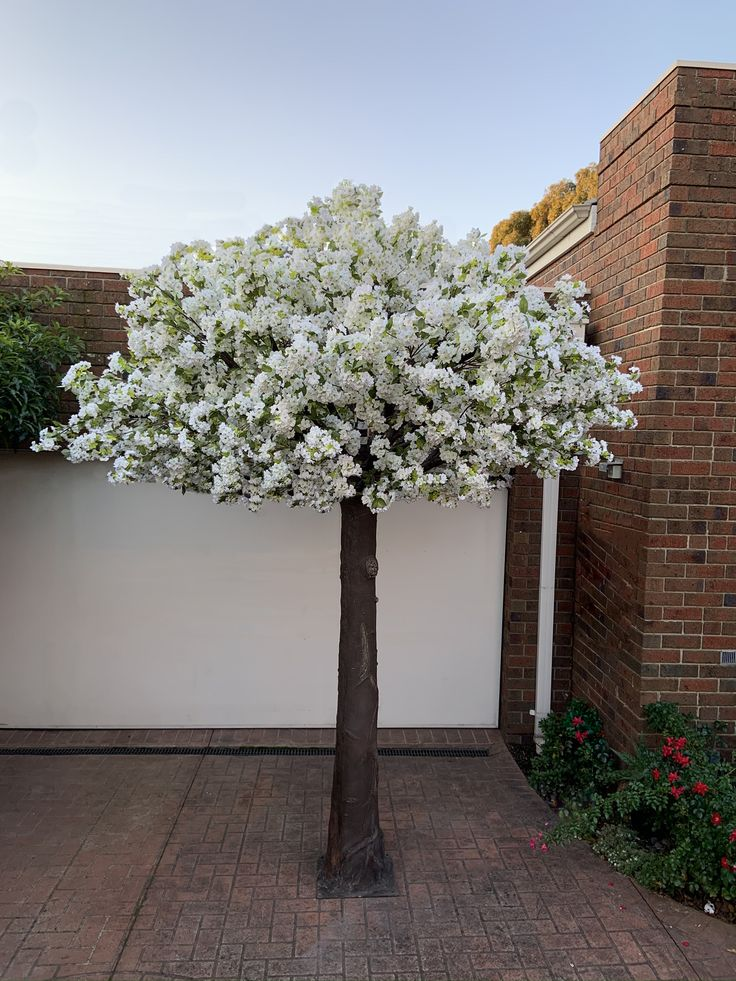 3 5m White Cherry Blossom Tree Hire Melbourne Wedding Floral Decor White Cherry Blossom Artificial Trees Cherry Blossom Tree