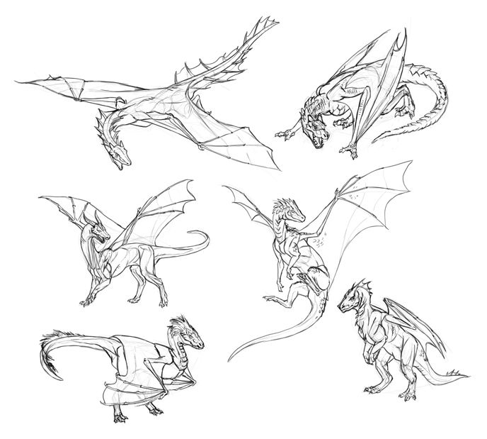 how to draw dragons  step