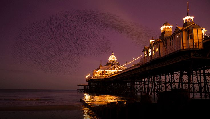 Purple skies sarah_medway_eastbourne_east_sussex_murmuration