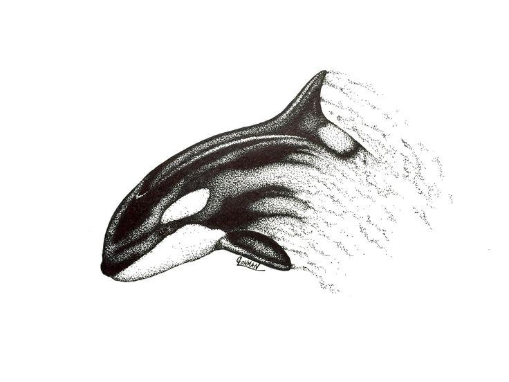 Marine Life Artwork - Orca (Killer Whale) Drawing - YouTube