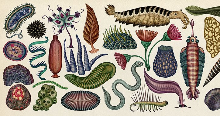It's Nice That | Illustrator Katie Scott shares the intricate working process behind her new book on evolution