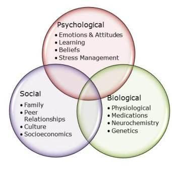 sexual offender treatment biopsychosocial perspectives