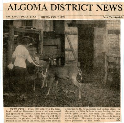 """""""Town Pets"""", (Thessalon, Ont) Sault Star Clipping, 1972"""