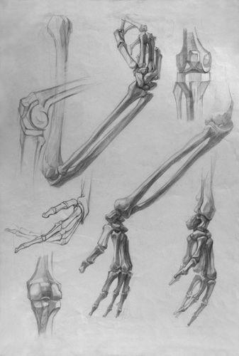 анатомический рисунок руки - Поиск в Google