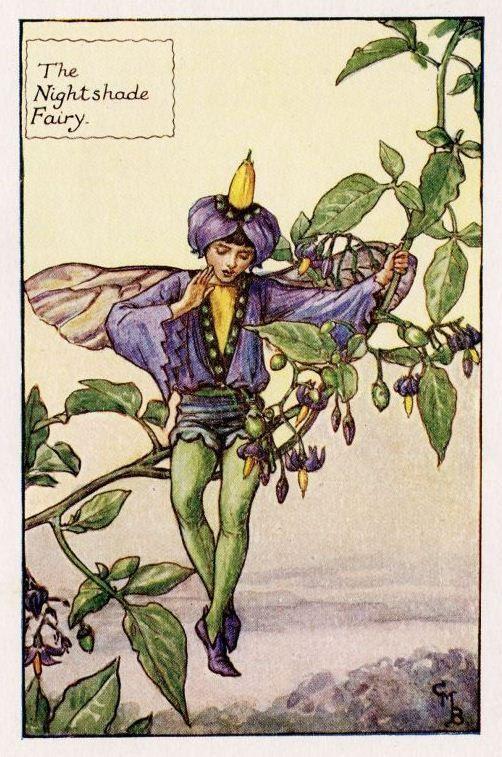 Nachtschade Flower Fairy Vintage Print, c.1927 Cicely Mary Barker-boekillustratie plaat