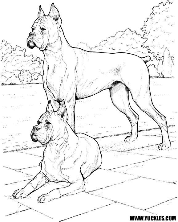 119 best Cats and Dogs images on Pinterest Coloring books