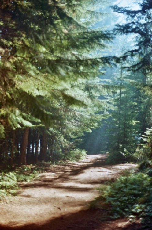 : Lights, Forests, Paths, Country Roads, Places, Pine, Trail Running, Into The Wood, Hiking